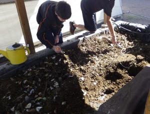 Removiendo los desechos orgánicos