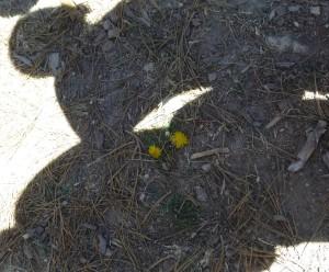 Primera flor en el camino