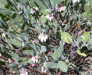 La flor de manzanilla