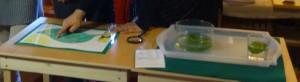 Experimento y cartelón de la fotosíntesis