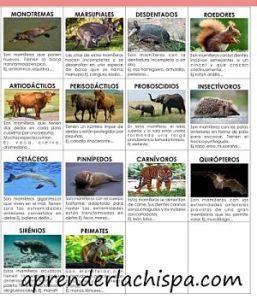 clasificacion mamiferos