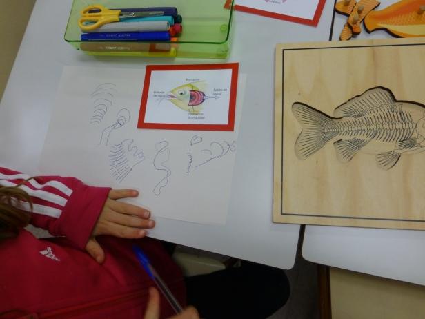 Dibujos de una niña de 5 años después de observar la anatomía interna